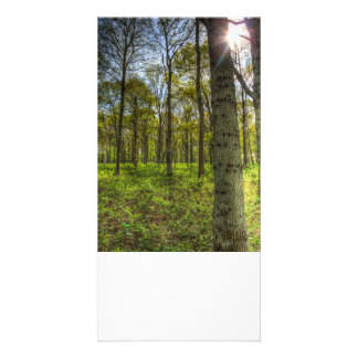 The Sun Touched Forest Customised Photo Card