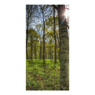 The Sun Touched Forest Picture Card