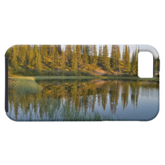 The sunrise illuminates trees on an unnamed tough iPhone 5 case