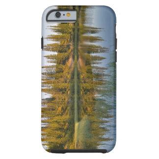 The sunrise illuminates trees on an unnamed tough iPhone 6 case