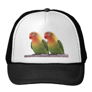 """The superior product """"of Fischer's Lovebird"""" Hats"""