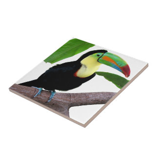 """The superior product """"of Keel-billed Toucan"""" Tile"""