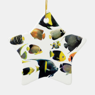 The superior product of Marine angelfish Ceramic Star Decoration