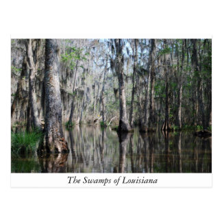 The Swamps of Louisiana Postcard