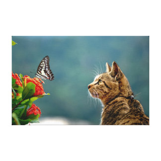 The Tabby & The Butterfly Canvas Print