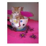 The tea cup fairy postcard