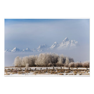 The Tetons and the frosty trees Photo Print
