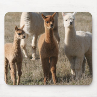 The Three Amigos, Alpaca-Style Mouse Mat
