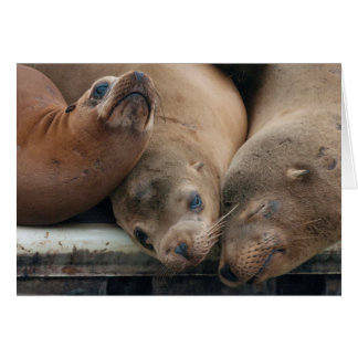The Three Amigos - California Sea Lions Greeting Card
