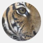 The Tiger's Eye Round Sticker