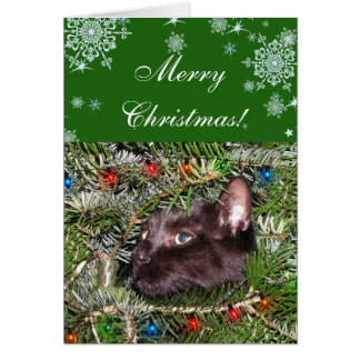 The tomcat in the Christmas tree Greeting Card