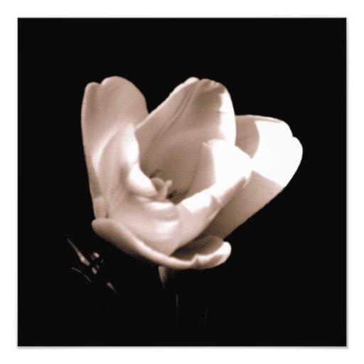 'The Tulip' Photographic Print