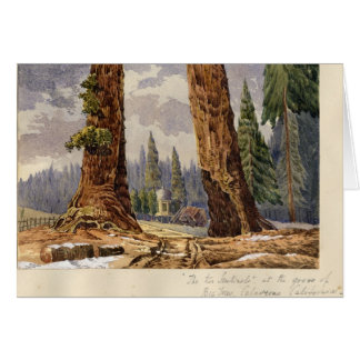 The Two Sentinels, at the Grove of Big Trees Card