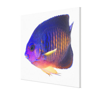 The two-spined angelfish canvas print