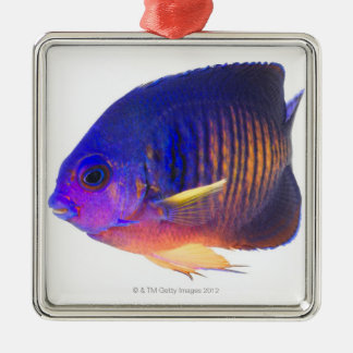 The two-spined angelfish Silver-Colored square decoration