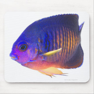 The two-spined angelfish mouse mat
