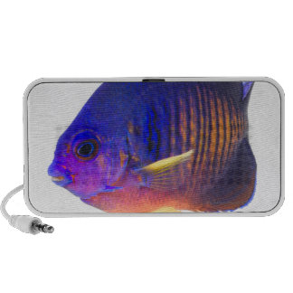 The two-spined angelfish mp3 speaker