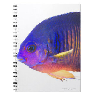 The two-spined angelfish spiral note books