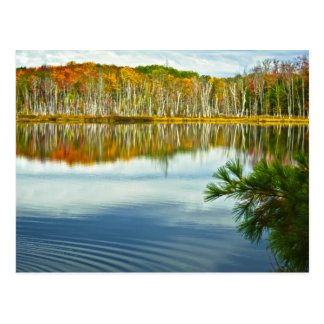 The U. P.: Autumn Birch Tree Reflections Postcard
