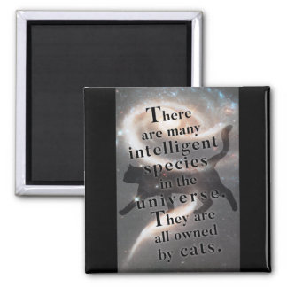 'The universe and cats' funny quote magnet