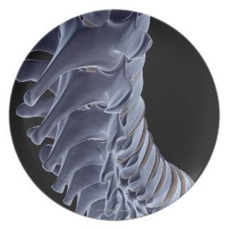 The Vertebral Column Party Plate