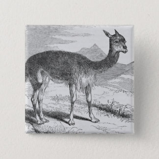 The Vicuna at the Rio de Azufre 15 Cm Square Badge