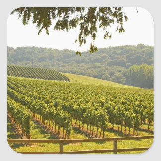 The vineyard and a valley with a forest - square sticker