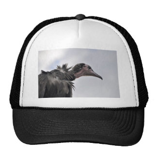 The Vulture Cap