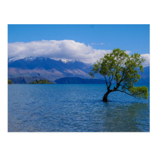 The Wanaka Tree, Lake Wanaka, NZ - Postcard