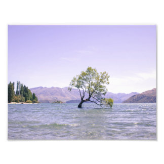 The Wanaka Tree Photograph