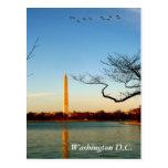 The Washington Monument Postcards