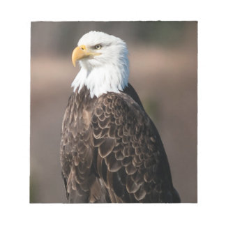 The watchful Eagle Notepad