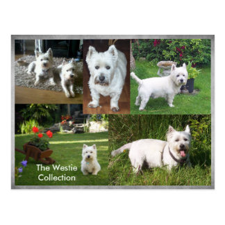 The Westie Collection postcard