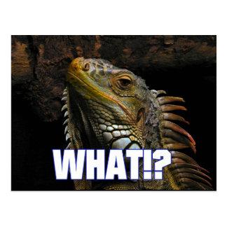 The What!? Iguana Postcard