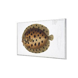 The Whiff (Pleuronectus Punctatus) plate CLXXXIX f Canvas Print