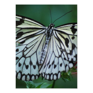 The White Butterfly 14 Cm X 19 Cm Invitation Card