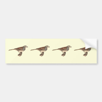 The White-crowned Sparrow	(Fringilla leucophrys) Bumper Sticker