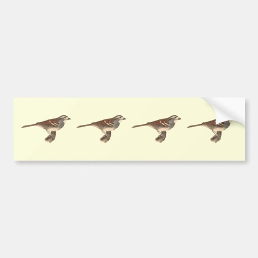 The White-crowned Sparrow(Fringilla leucophrys) Bumper Stickers