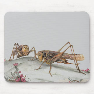 THE WHITE-FACED DECTICUS MOUSE PAD