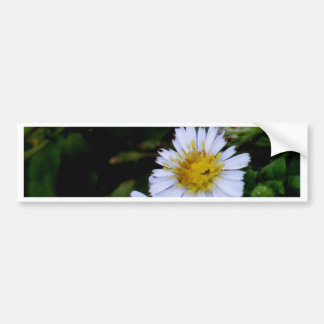 The white flower bumper sticker