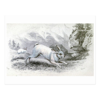 The White Hare Postcards