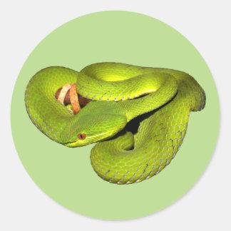 The white-lipped pit viper classic round sticker