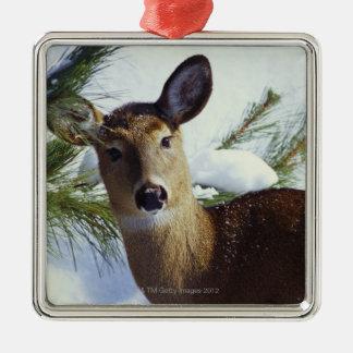 The White-tailed deer (Odocoileus virginianus), Christmas Ornament