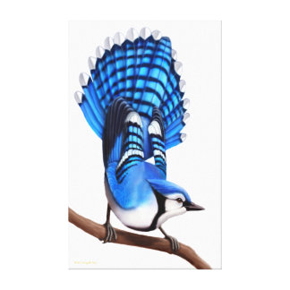The Wild Blue Jay Bird Wrapped Canvas Stretched Canvas Prints