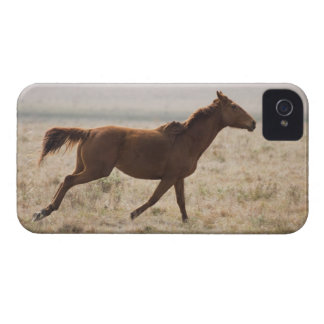 The wild horse (Equus ferus) is a species of the 2 iPhone 4 Cases