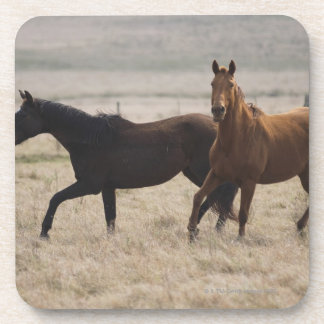 The wild horse (Equus ferus) is a species of the Drink Coasters