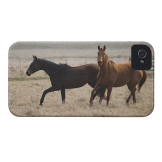 The wild horse (Equus ferus) is a species of the iPhone 4 Cases