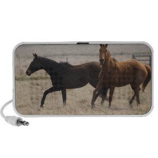 The wild horse (Equus ferus) is a species of the iPhone Speakers