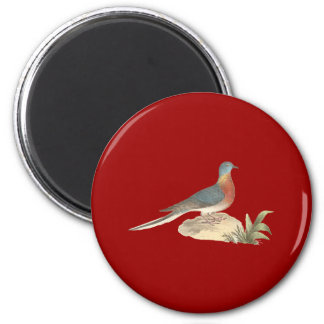The Wild Pigeon (Ectopistes migratoria) Magnet