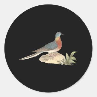 The Wild Pigeon (Ectopistes migratoria) Round Sticker